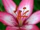 Stunning Perennial Flowers
