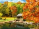3D Falling Leaves Animated Wallpaper