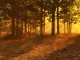Autumn Forest 3D Screensaver and Animated Wallpaper
