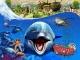 Wildlife Park 2 + Marine World