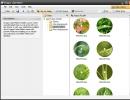 Nature Pack Folder