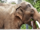 Asian Elephants Screensaver