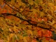 Fall Colors Wallpaper